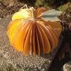amberladley-happilyupcycled-book-page-pumpkins - 2